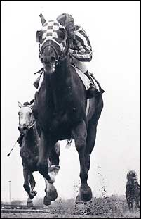 Secretariat's Gotham triumph not only set the racing world abuzz, but even general sports fans who seldom paid much attention to horse racing now eagerly awaited the next installment in Secretariat's triumphant march toward the Kentucky Derby.